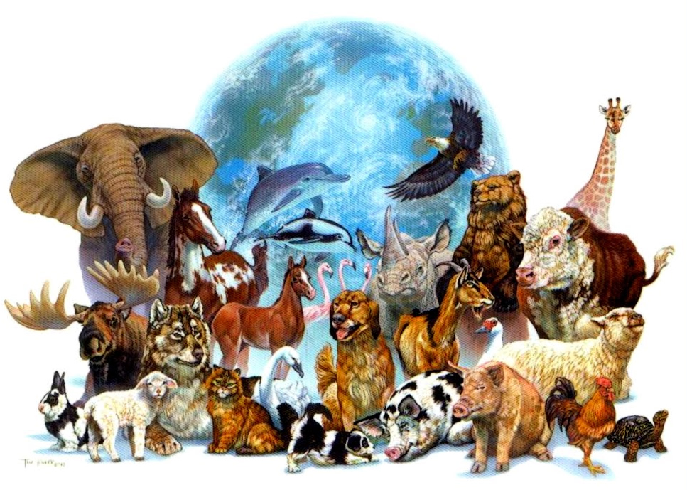 AnimalsEarth